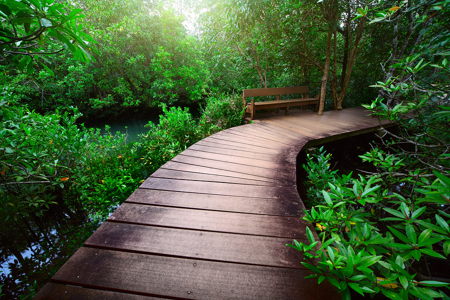 bigstock-Wood-path-over-river-and-throu-14022170